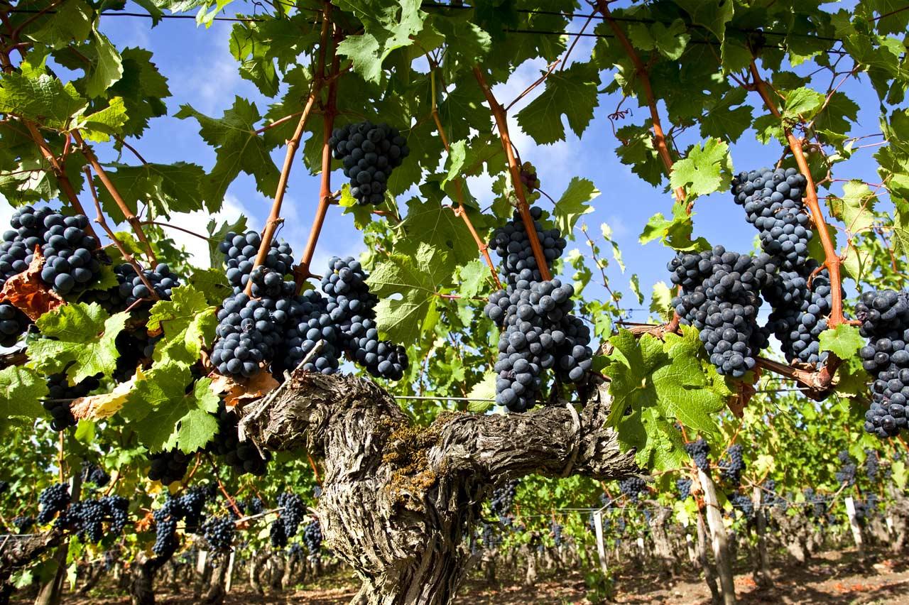 https://www.ecoleduvindebordeaux.com/5-tips-to-increase-wine-sales/