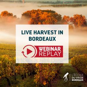 Live Harvest in Bordeaux Webinar replay