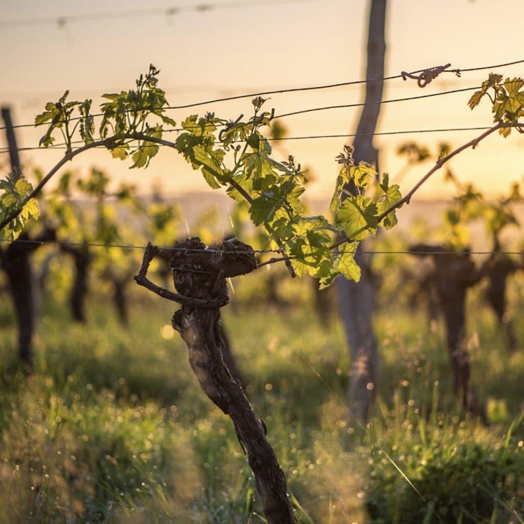 Konsumtrends - Weingut Bordeaux