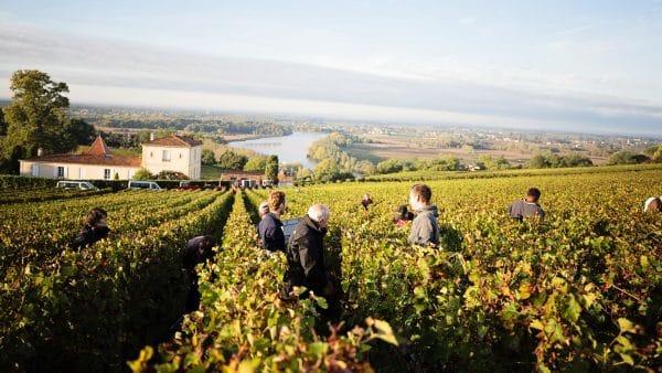 https://www.ecoleduvindebordeaux.com/us/sustainable-wine-production-in-bordeaux/
