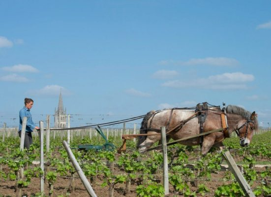 https://www.ecoleduvindebordeaux.com/ja/sustainable_wine_qa/