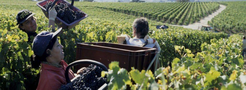 Managing Work in the Vineyard