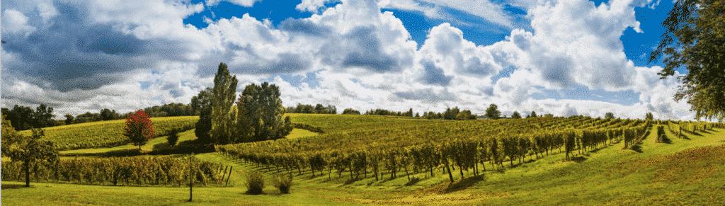 Dry White Bordeaux Appellations