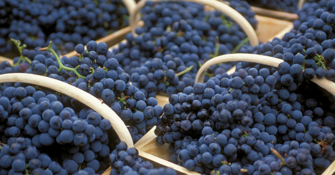 basket of red grapes