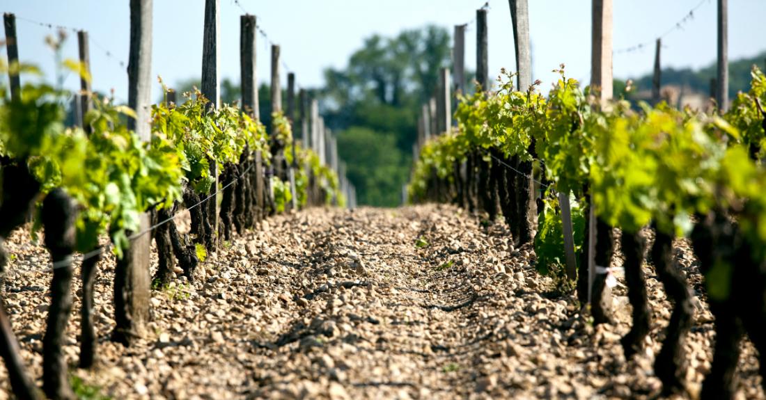 rocky vineyard in bordeaux france