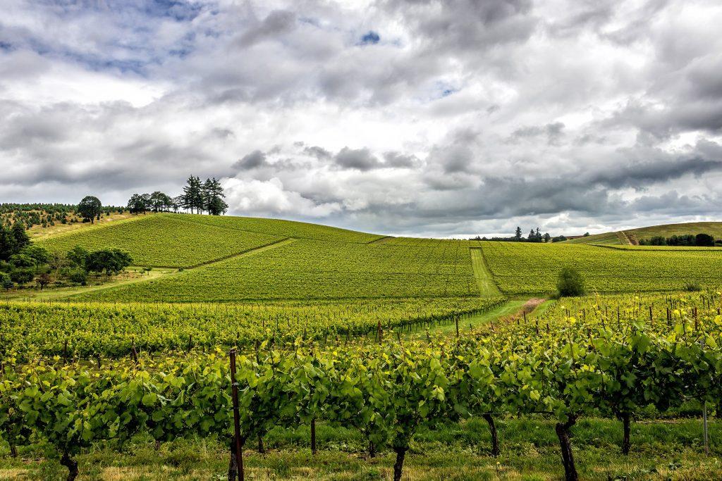 agroforesterie dans le vignoble bordelais